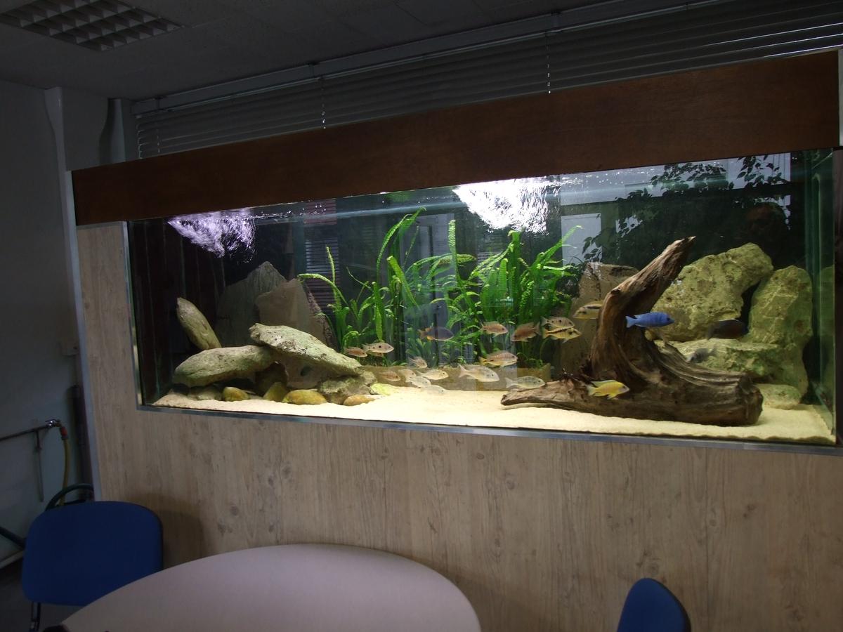 Association comtoise d 39 aquariophilie l aca c est quoi for Vente aquariophilie